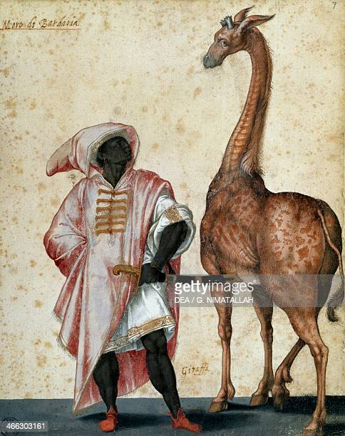 Moor from Barbaria with giraffe drawing by Jacopo Ligozzi