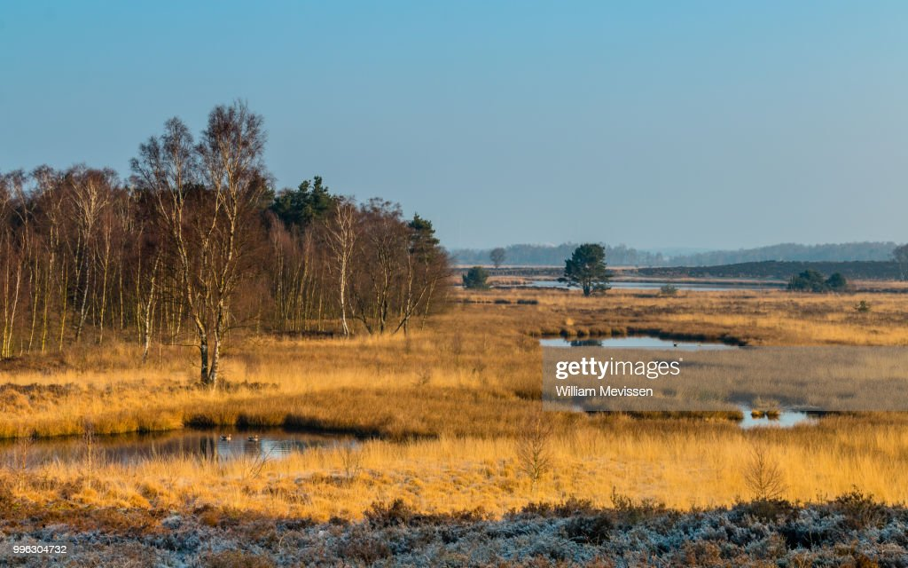 Moor Grass : Stockfoto