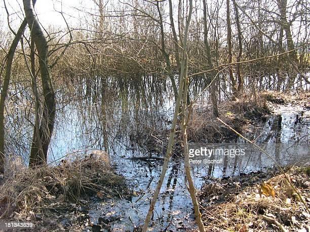 Moor, Künstlerdorf Worpswede , Niedersachsen, Deutschland, Europa, , Prod.-Nr.: 926/2003, Moorlandschaft, Wasser, Natur, Landschaft, Reise,