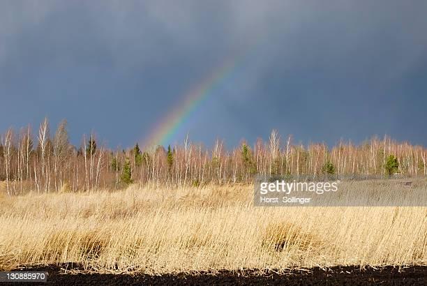 Moor landscape, rainbow in a cloudy sky, Nicklheim, Bavaria, Germany, Europe