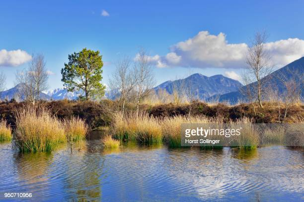 Moor pond, Grundbeckenmoor with bulrushes (Schoenoplectus lacustris), Bavarian Alps in the background, near Raubling, Alpine foothills, Bavaria, Germany