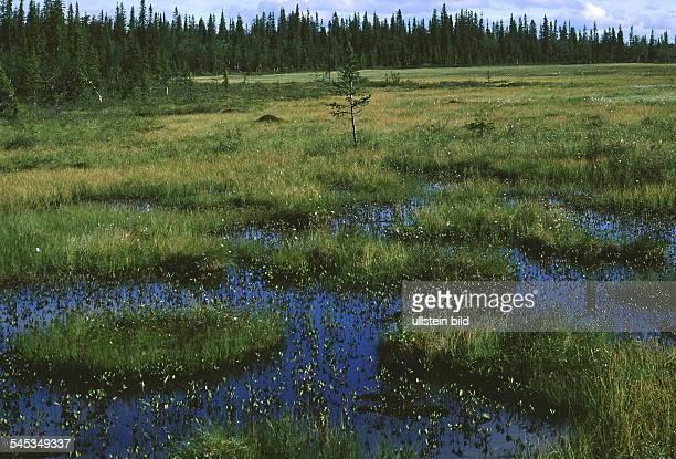 Moor - und Wiesenlandschaft - 1999