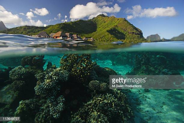 moorea coral reef - tahiti stock pictures, royalty-free photos & images