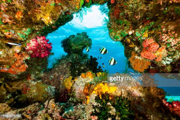 moorish ideols zanclus cornutus in blue window with colorful frame, raja ampat, indonesia - raja ampat islands stock photos and pictures