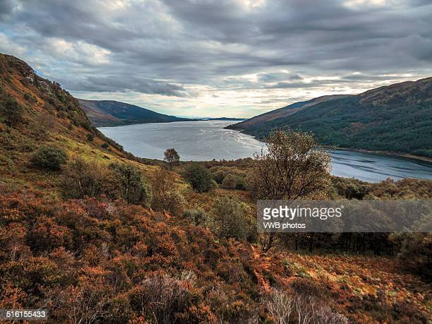 Moorland and Trees, Loch Striven, Cowal
