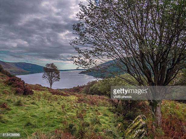 Moorland and Trees, Loch Striven