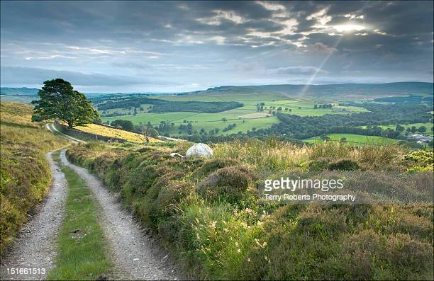 moorland at storiths - north yorkshire stock pictures, royalty-free photos & images