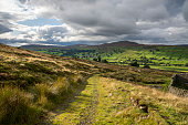 Moorland path at Grinton, Swaledale, Yorkshire Dales, England