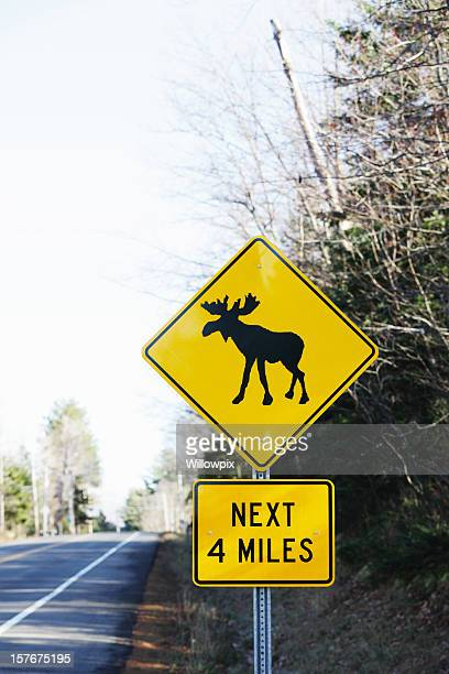 moose crossing road sign in rural new york state - animal crossing stock pictures, royalty-free photos & images