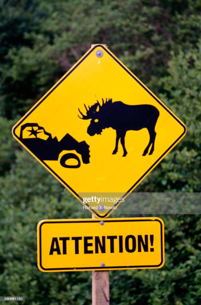moose crossing sign stock photo getty images