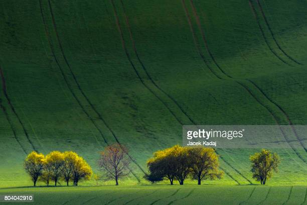 Moravian green landscape