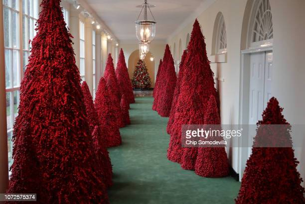More than 40 red topiary trees line the East colonnade as part of the holiday decorations at the White House November 26 2018 in Washington DC The...