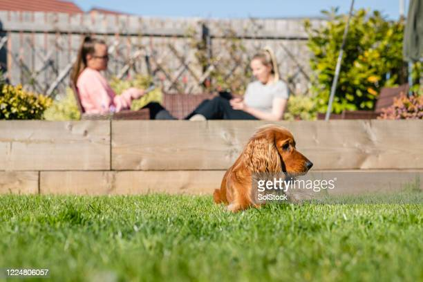 more time for each other - pets stock pictures, royalty-free photos & images