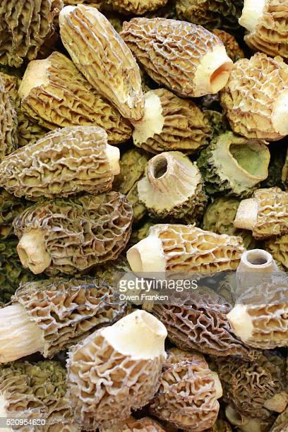 morel mushrooms at Restaurant Guy Savoy, Paris