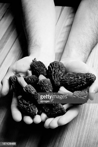 morel mushrooms in black and white - black and white vegetables stock photos and pictures