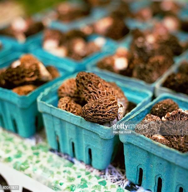 Morel mushrooms in cartons