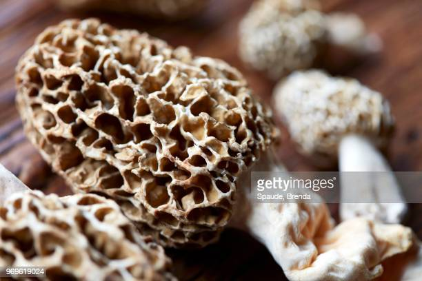 morel mushrooms (close-up) - morel mushroom stock pictures, royalty-free photos & images