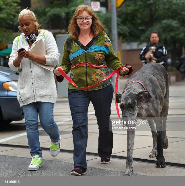 TORONTO ON SEPTEMBER 19 Morgan goes for a walk along Queen street with owner Cathy Payne An Ontario dog is the world's tallest female dog and will be...