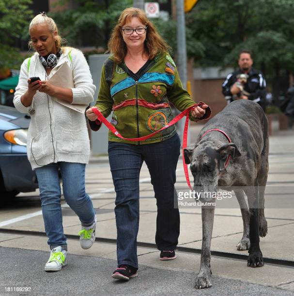 Morgan goes for a walk along Queen street with owner Cathy Payne An Ontario dog is the world's tallest female dog and will be entered into the 2014...
