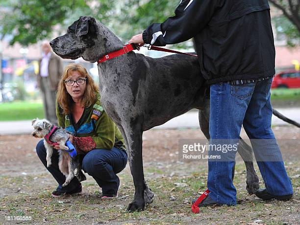 TORONTO ON SEPTEMBER 19 Morgan is out for a walk with owners Cathy and Dave Payne and their daughter's dog Penny An Ontario dog is the world's...