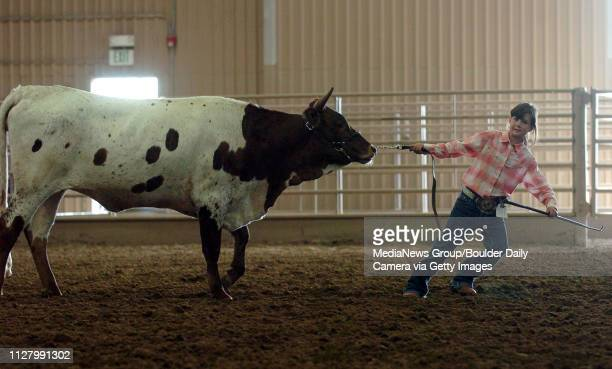 Morgen Frank of Johnstown has to give an extra effort to keep her longhorn moving on August 3 2008The Boulder County Fair will continue all week at...