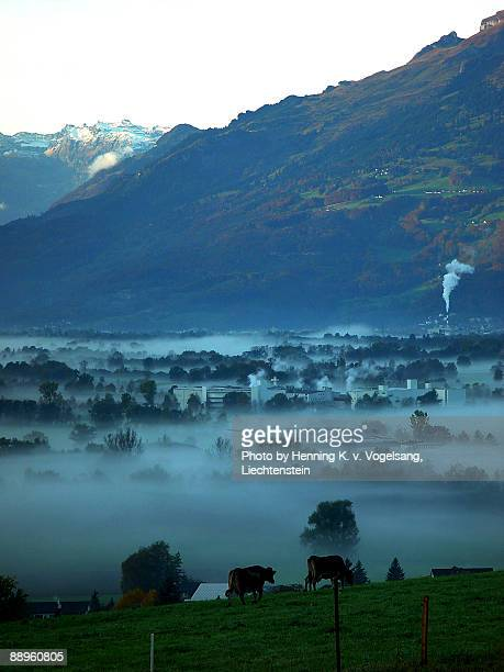 morgen morning misty - liechtenstein stock pictures, royalty-free photos & images