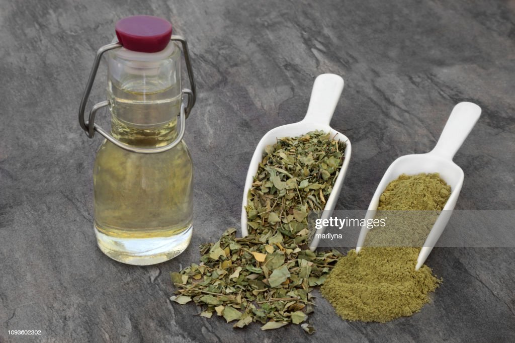 Moringa Oliefera Herb : Stock Photo