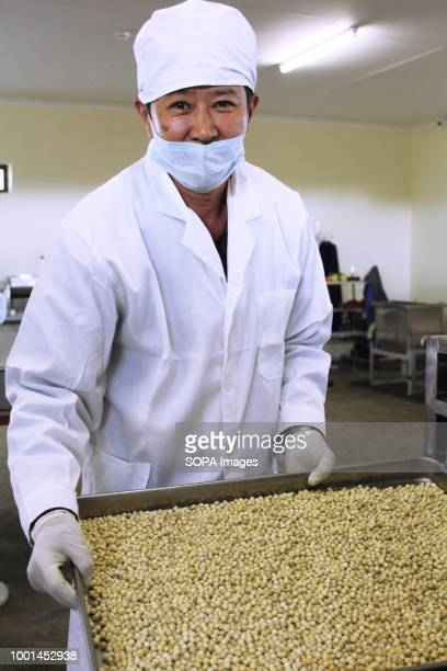 Moringa seeds after harvesting and extracting from pods by the Moringa Technology Industry MTI is a company that manufactures moringa products such...