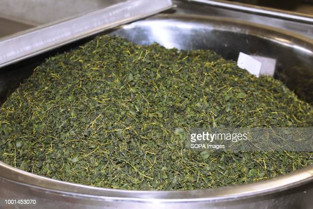 Moringa Technology Industry moringa leaves awaiting compression in the reshaping machine that will get them ready for drying and packaging into tea...