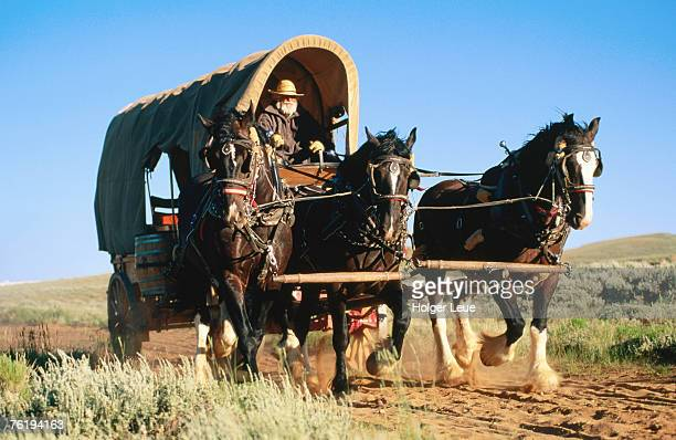 Mormon man driving horse carriage, Mormon Pioneer Wagon Train to Utah, near South Pass, Wyoming, United States of America, North America