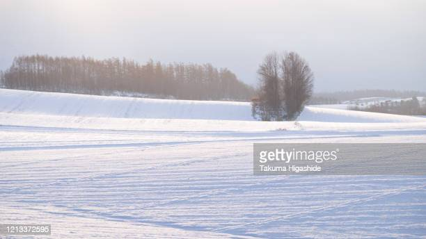morning air - snowfield stock pictures, royalty-free photos & images