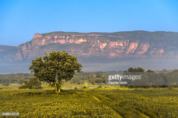 morning at entabeni game reserve - limpopo province stock pictures, royalty-free photos & images