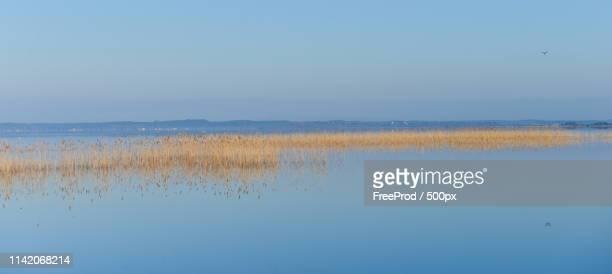 morning at sunrise over lake biscarosse, france, europe - biscarrosse photos et images de collection