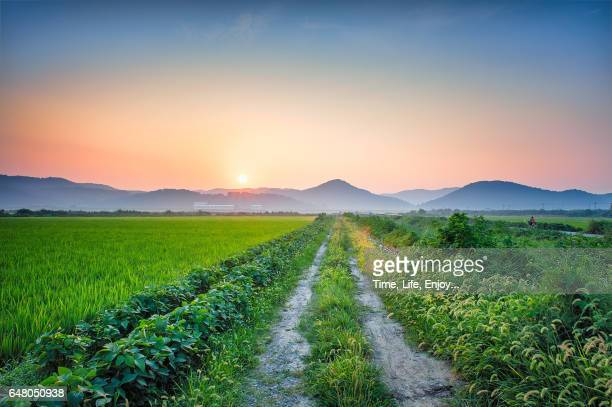 morning at the field - uncultivated stock pictures, royalty-free photos & images