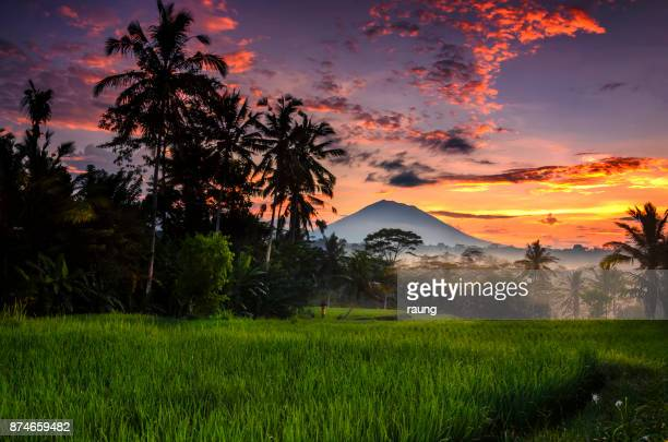morning at ubud - bali stock pictures, royalty-free photos & images