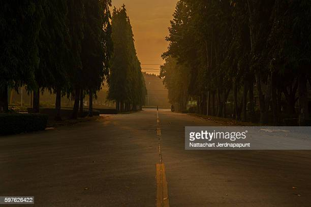Morning beautiful road through the pine tree park