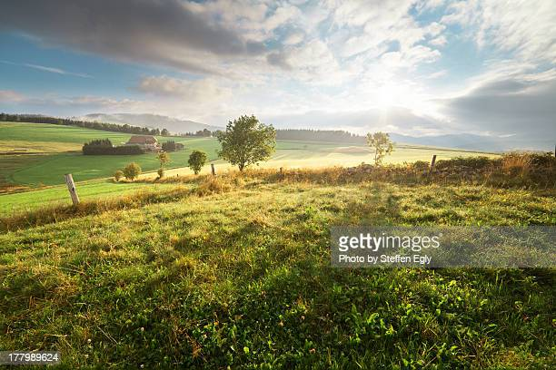 morning beauty - baden württemberg stock photos and pictures