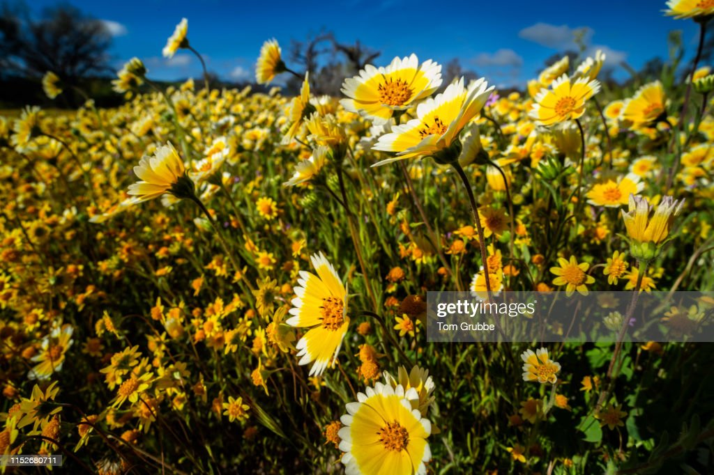 Morning Bloom : Stock Photo