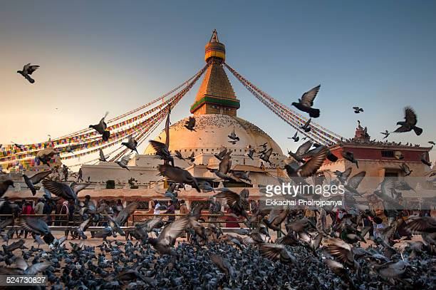 morning boudhanath - stupa stock pictures, royalty-free photos & images