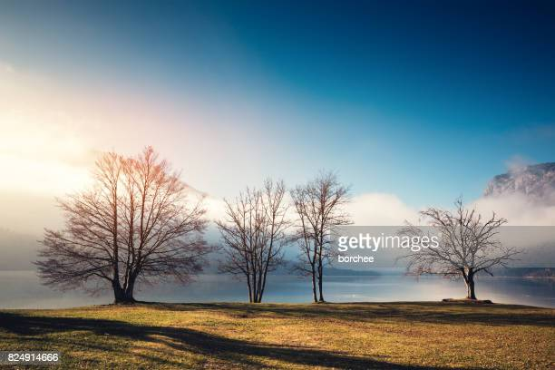 morning by the lake - bare tree stock pictures, royalty-free photos & images