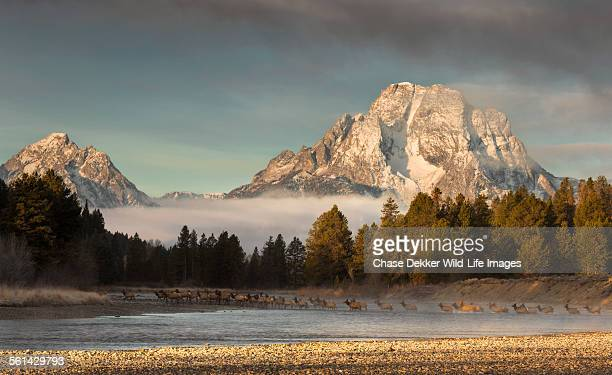 morning commute - jackson hole stock pictures, royalty-free photos & images