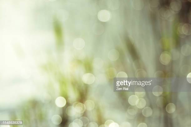 morning dew drops creating dancing light orbs on soft focused grasses - soft focus stock pictures, royalty-free photos & images
