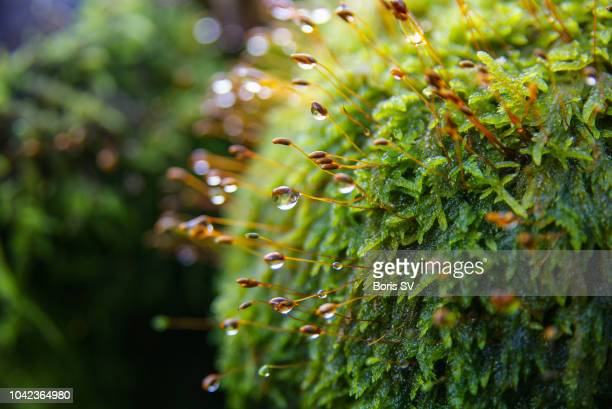 morning dew on the moss. autumn - raindrop stock pictures, royalty-free photos & images