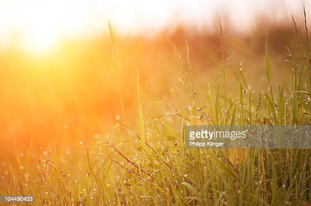 morning dew - dew stock pictures, royalty-free photos & images