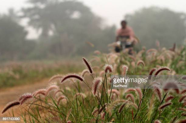 Morning dews engulfs in way side wild flowers due to heavy fog outskirts of the eastern Indian state Odisha's capital city Bhubaneswar on 13 December...