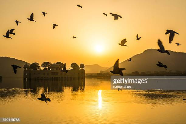 Morning fly at Jal Mahal