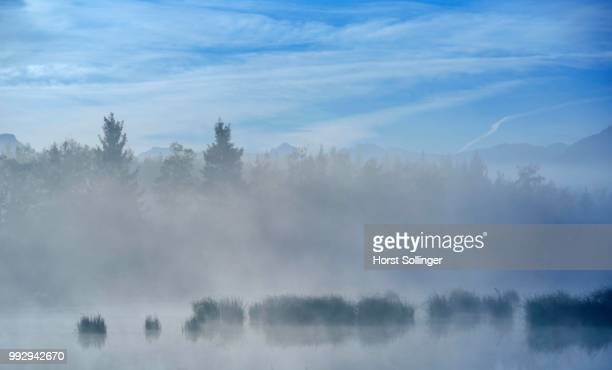 Morning fog over a moor pond, Nicklheim; Voralpenland, Raubling, Bavaria, Germany