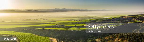 Morning Fog Over Monterey County Vineyards - Aerial Panorama