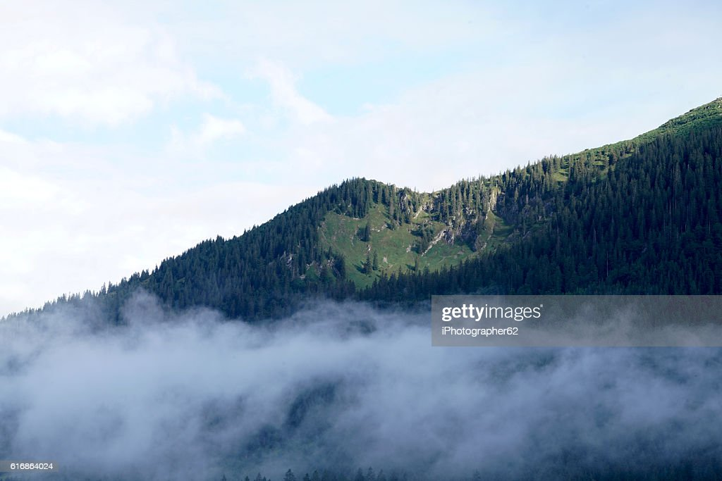 morning fog : Stock Photo