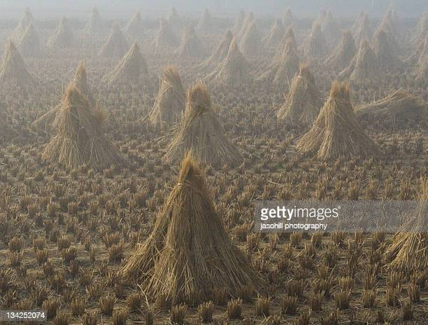 morning fog reveals cones - iwate prefecture stock pictures, royalty-free photos & images